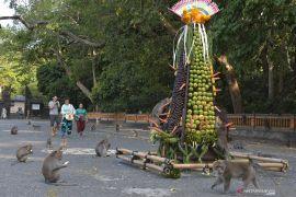 Pengelola Alas Kedaton Bali gratiskan tiket masuk bagi wisatawan domestik/lokal (video)