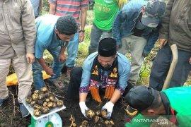 Bupati janji bangun penangkaran bibit kentang di Bener Meriah