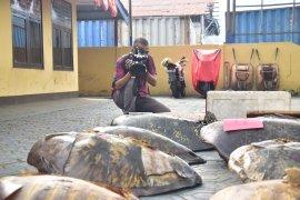 Polairud Malut tangkap 10 nelayan pemburu penyu