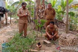 Bunga bangkai langka tumbuh di Alam Barajo Kota Jambi