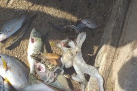 LIPI imbau masyarakat tidak panik dengan kematian ikan di Kepulauan Tanimbar