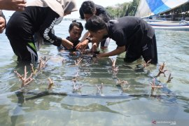 GenBI Jember tanam terumbu karang