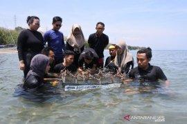Puluhan mahasiswa tanam terumbu karang di Pasir Putih Situbondo