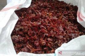 Harga berbagai hasil perkebunan Maluku di Ambon bertahan