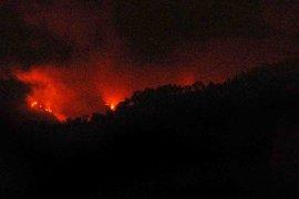 BPBD Jember bantu padamkan kebakaran hutan di Gunung Argopuro
