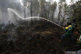 BRG koordinasi pencegahan kebakaran hutan dan lahan di Kalsel