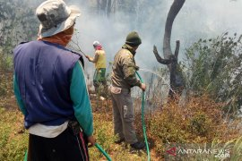 731.413 hektare hutan terbakar di Sulawesi Tenggara