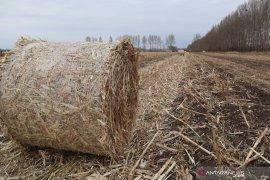 Petani di Mongolia untung Rp5,9 miliar dari jerami