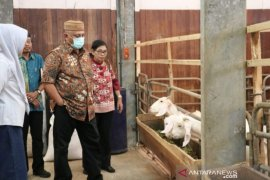Gorontalo kembangkan peternakan kambing pedaging