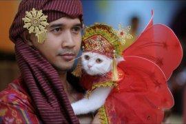 Kontes busana kucing