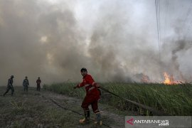 Status siaga darurat karhutla Prov Riau berakhir besok