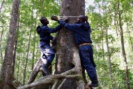 Usaid Lestari bersama warga Asmat pantau hutan mangrove