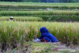Ada empat kecamatan di Purwakarta masuk zona merah alih fungsi lahan sawah