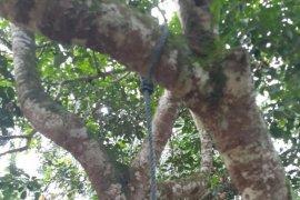 Diduga stres, buruh bangunan gantung diri di pohon rambutan