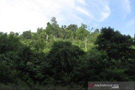Akademisi: Pengelolaan hutan harus seimbang ekonomi dan lingkungan