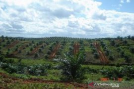 Perusahaan sawit diharap ikut tangani jalan provinsi di Kapuas Hulu
