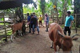 Lima kelompok tani peroleh 35 sapi bantuan pemerintah