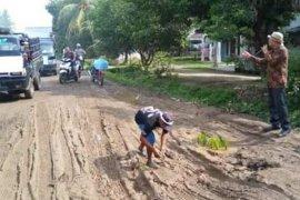 Protes jalan rusak, ratusan warga lima desa di Simalungun tanam padi di badan jalan