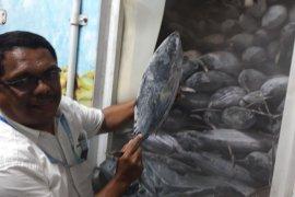 PT Perikanan Nusantara akan ekspor 50 ton ikan cakalang beku  ke Jepang