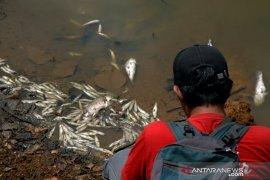 Ikan mati akibat cuaca ekstrim Page 2 Small