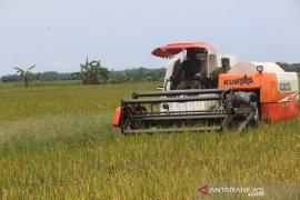 Penajam dapat bantuan benih padi untuk 3.500 hektare