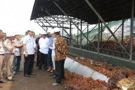 Kementan pacu ekspor unggulan pertanian Kalsel