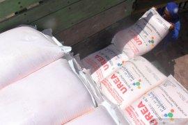 Blokir dibuka, puluhan ton pupuk bersubsidi disalurkan ke Tulungagung selatan