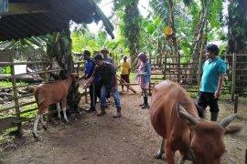 Delapan kelompok tani Mukomuko peroleh 80 sapi