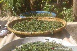 Petani teh di Purwakarta didorong untuk tingkatkan kualitas