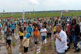 Kubu Raya kembali gelar Gerakan Wisata Tanam Padi Milenial