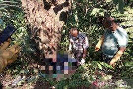 Mayat dalam koper, Polres Bogor periksa enam saksi