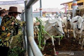 Kementan mendorong koperasi di Subang jadi percontohan korporasi peternak