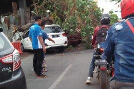 BPBD Kota Kediri imbau warga pangkas ranting pohon