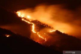 Hutan lereng Gunung Lawu terbakar