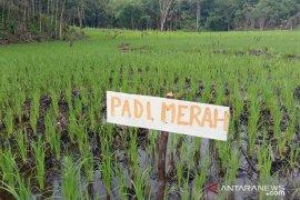 Penyuluh optimalkan pendampingan petani di Landak