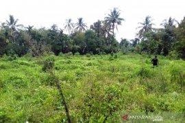 Masyarakat Angkola Barat butuh perhatian perbaikan bendung irigasi Saba Tahalak