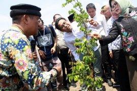Desa Watesari terima dana Rp1,3 miliar dari Kementerian PDTT, kembangkan wisata petik buah belimbing