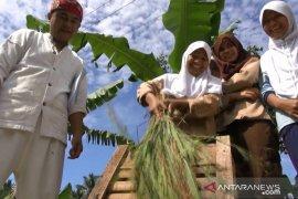Kabupaten Sukabumi  surplus beras mencapai 400 ribu ton