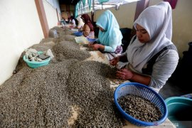Harga kopi gayo diprediksi turun dalam waktu lama