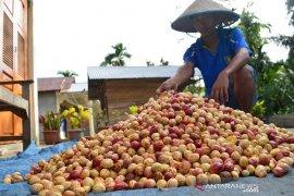 DPRD Maluku minta kepastian CV. SBM buka perkebunan pala