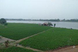 Sejumlah petani Karawang menunda tanam akibat persediaan air belum mencukupi