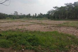 Hujan mulai turun, lahan persawahan di Lebak masih alami kekeringan