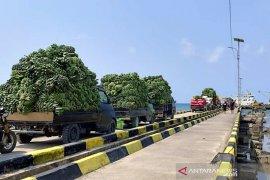Terkendala transportasi, pisang Enggano menumpuk di pulau