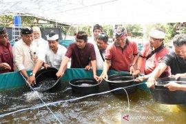 Kementerian Kelautan budidayakan ikan lele sistem bioflok di Denpasar