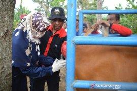 Pemkab Bone Bolango upaya tingkatkan populasi sapi