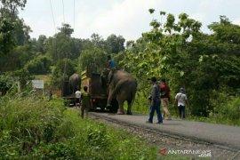 Delapan gajah dikembalikan ke bawah Bukit Serelo Lahat