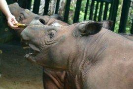 TNWK Lampung  paling banyak simpan badak sumatera