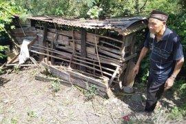 Beruang berulang kali serang ternak kambing warga di Aceh Tengah