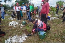 PT Timah dan FKPM tanam seribu batang pohon pelawan