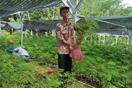 Persemaian KPH Tabalong siapkan bibit  dukung revolusi hijau